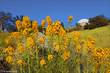 "LH2260_Wallflowers 36"" Dome"